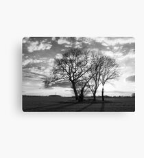 Tree group in the sunset Canvas Print