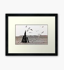 Seagulls at the sea - duotone Framed Print