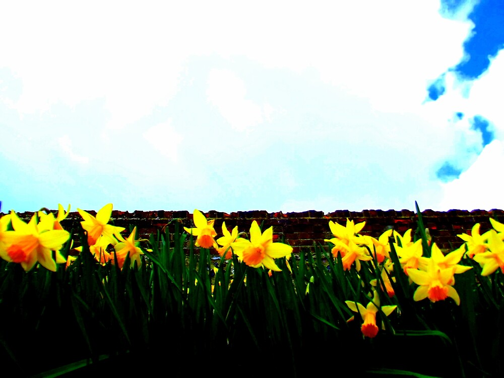Daffodils by SnapThat