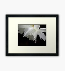 White Daffodil Floral Photo Print Framed Print