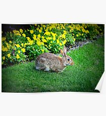 Silly Rabbit Poster