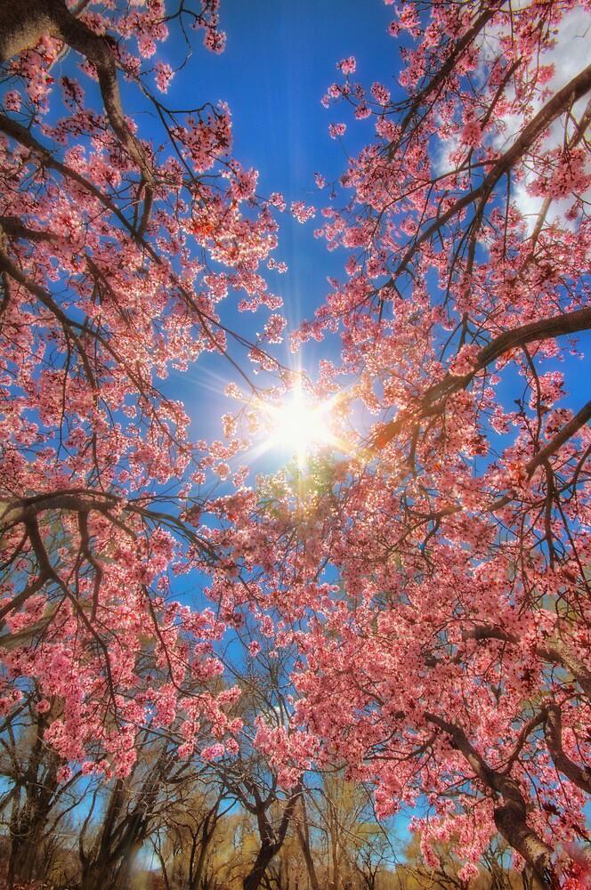 Pink Reach by Bob Larson
