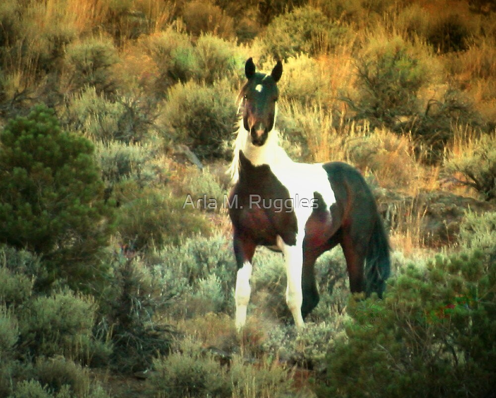 Born Free ... And Curious As Ever by Arla M. Ruggles