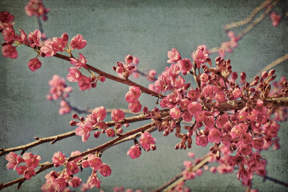Spring blossom. by Lyn Darlington