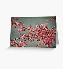 Spring blossom. Greeting Card