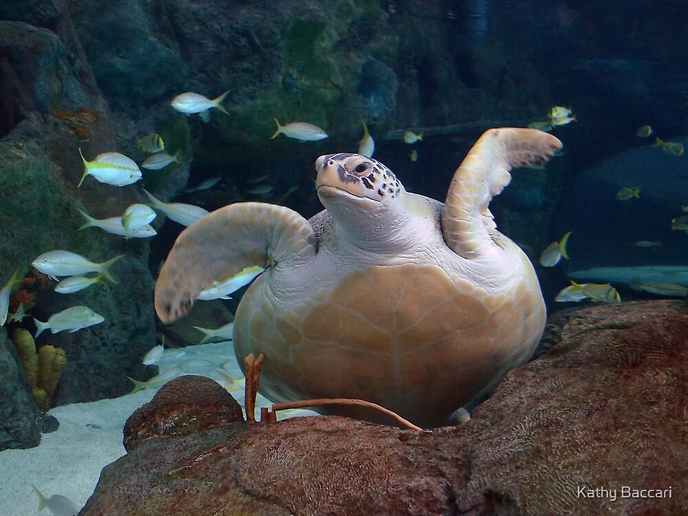 Green Sea Turtle by Kathy Baccari