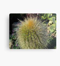 Prickly Cactus Close up Metal Print