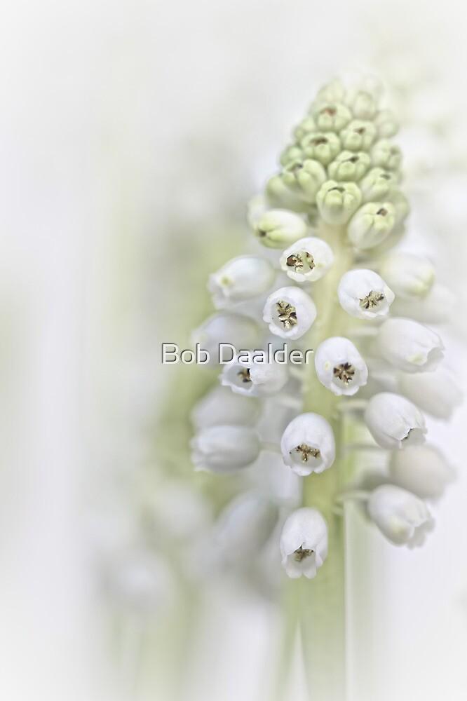 White Grape Hyacinth II by Bob Daalder