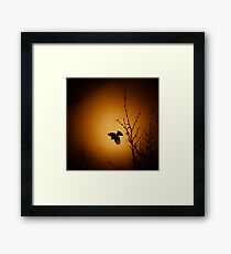 sparrow (001)  Framed Print