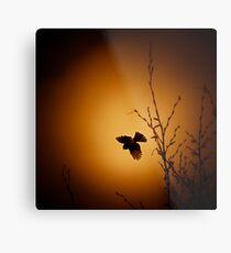 sparrow (001)  Metal Print