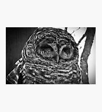 Barred Owl in Contemplation Photographic Print