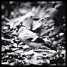 sparrow (003)  by dirk hinz