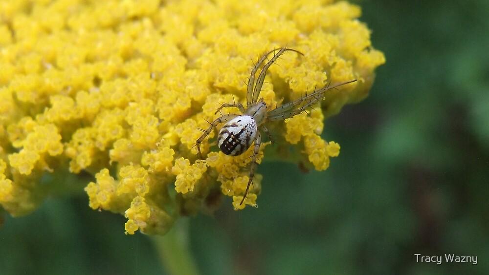 Spider On Yellow Yarrow by Tracy Wazny