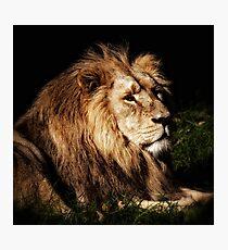 Proud Lion Photographic Print
