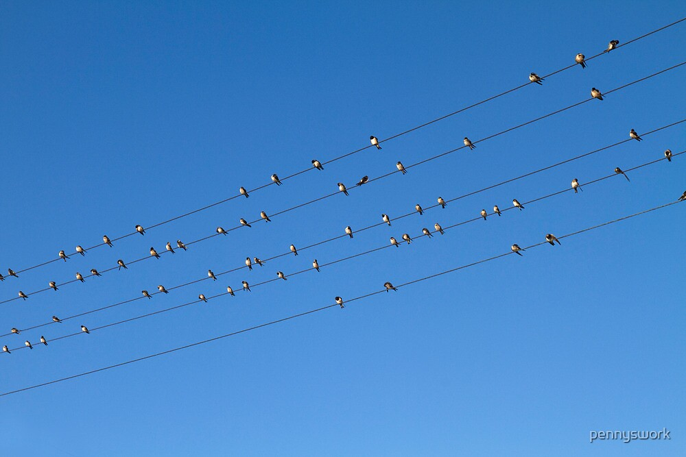 Birds on a Wire 2 by pennyswork