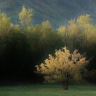 light on the tree by dc witmer
