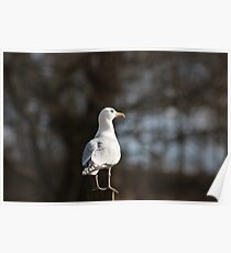 Lone Gull Poster