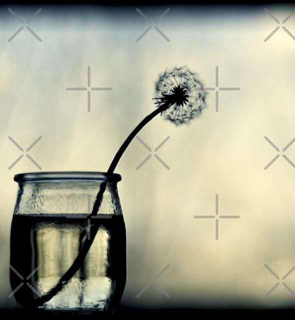 make a wish by Ingrid Beddoes