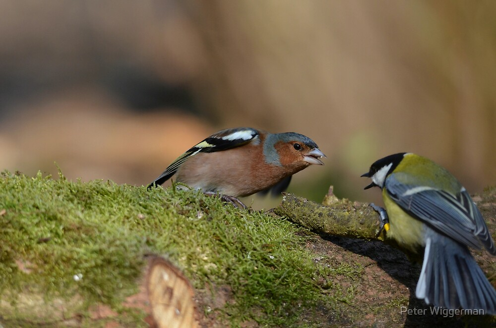 No fighting please !! by Peter Wiggerman