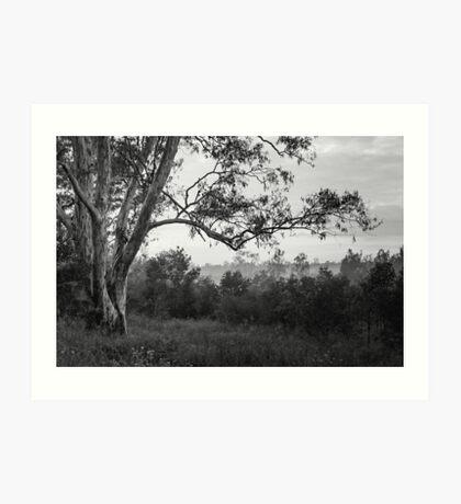 The old gum tree Art Print