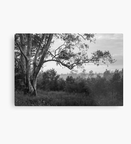 The old gum tree Metal Print