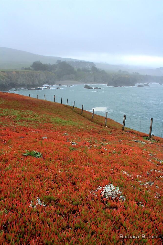 Colorful Coast by Barbara  Brown
