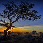 Foxy Sunset - Dog Rocks - Batesford Victoria  2013 by bekyimage