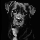 A Loveable Face by Smart Imaging by SmartImaging