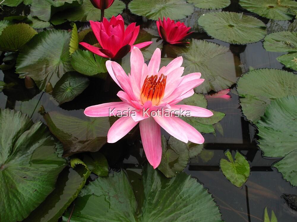 Pink water lilies by Kasia  Kotlarska