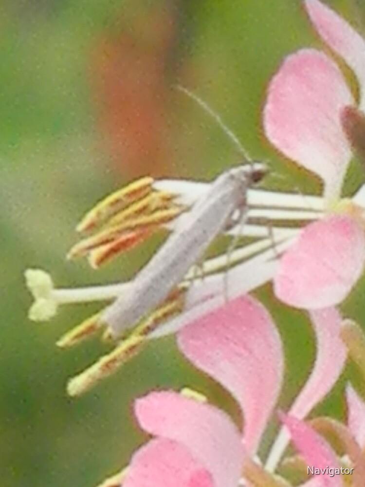 Closeup of Flower Rider by Navigator
