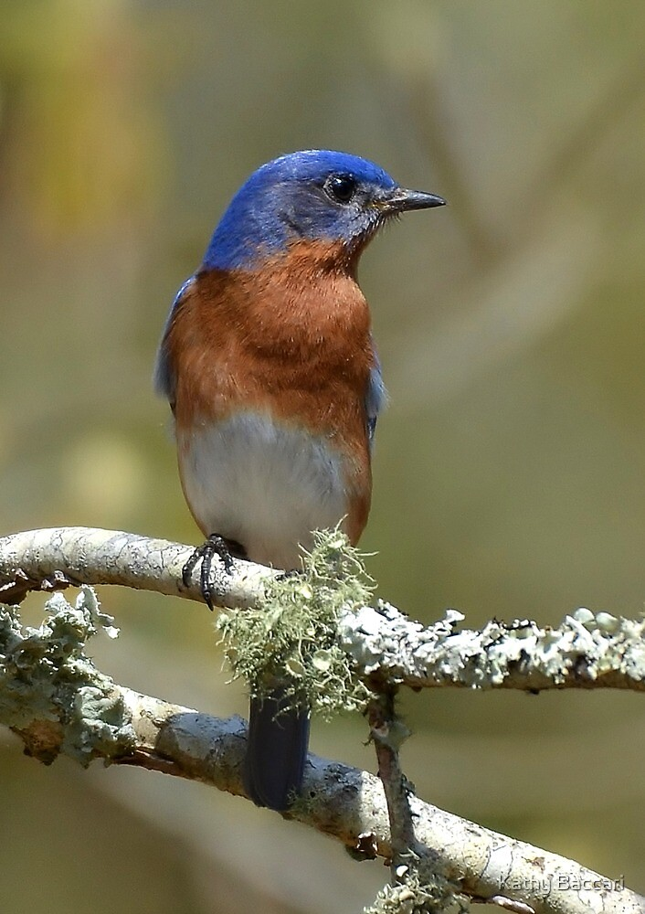 Bluebird And Lichen by Kathy Baccari