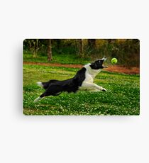My Ball! Canvas Print