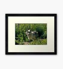 "'Timber Wolf"" Framed Print"