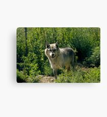 """'Timber Wolf"""" Canvas Print"""
