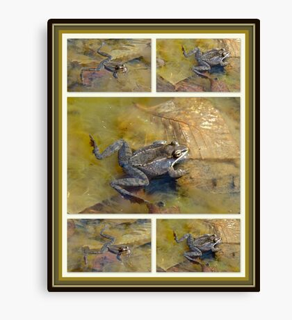 PICKEREL FROG - Rana Palustris Canvas Print