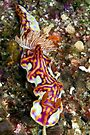 Nudi by David Wachenfeld