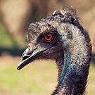 Inquisitive Emu II by iltby
