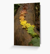 Autumn Leaf Trail Greeting Card