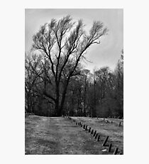 resting in peace Photographic Print