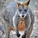 Wallaby 4132 by Tom Newman
