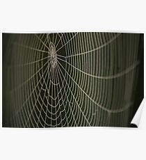 Dew drop spider-web Poster