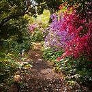 A Walk down the Garden Path by Debra Fedchin