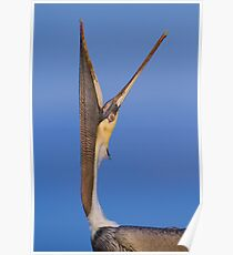 Pelican Stretch Poster