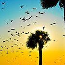 A Florida Evening by Bill Colman