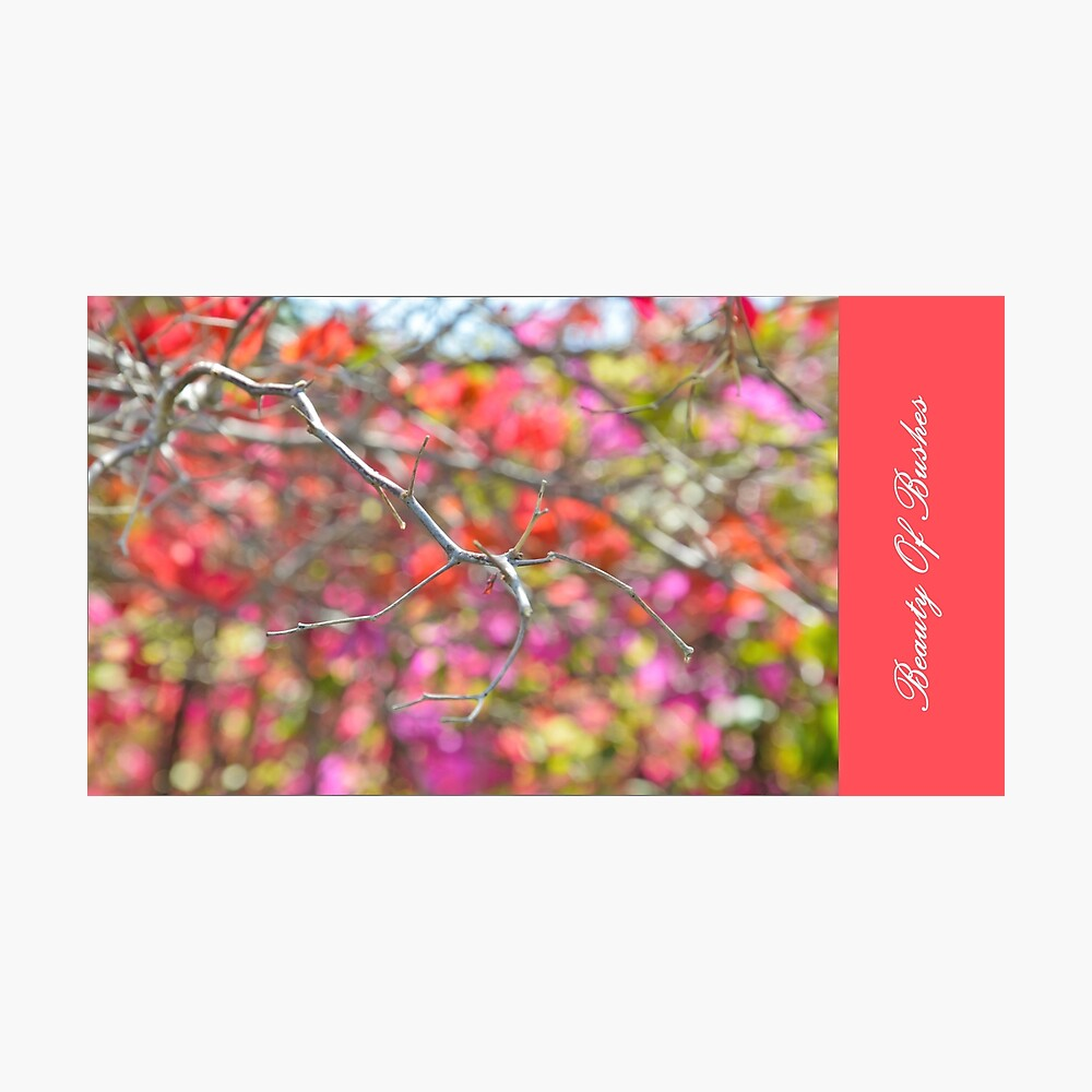 Beauty OF Bushes Photographic Print