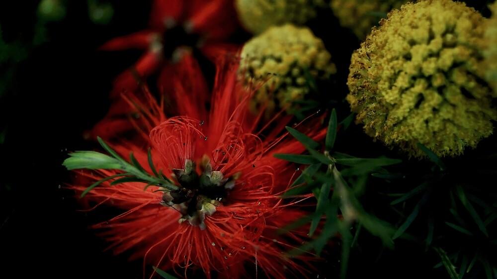 """Australian Flowers"" Native by Toni McPherson"
