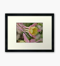 Columbine, Pink With Yellow Framed Print