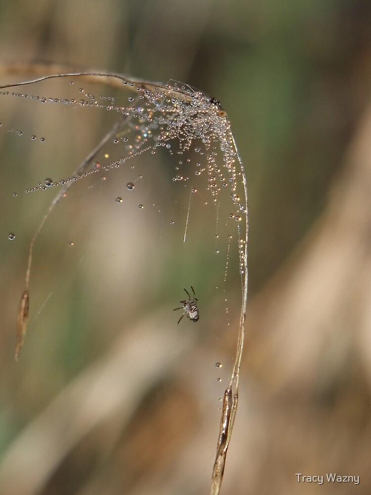 Sparkling Spider Web by Tracy Wazny