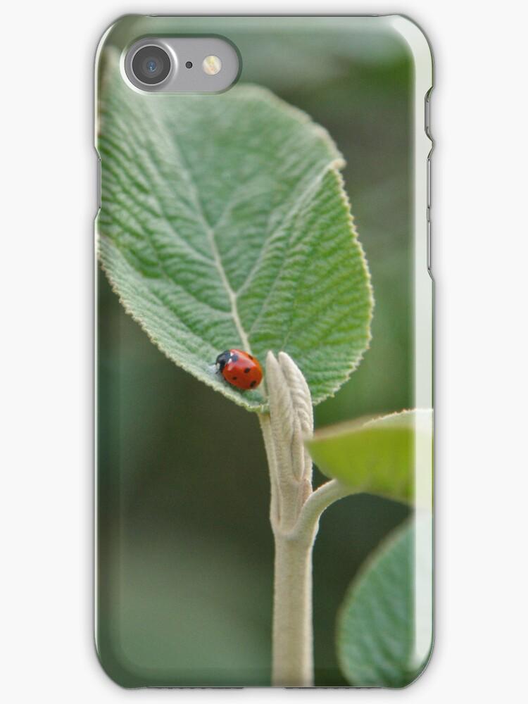 Ladybug iPhone Case by flashcompact