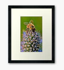 spring Bee Framed Print